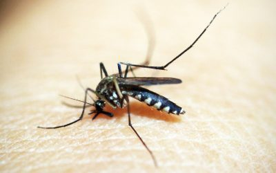 You've heard of Zika and West Nile, but what is Japanese encephalitis and why should you care?